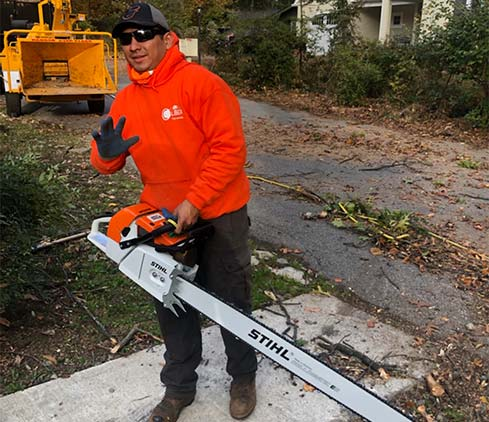 Caliber Tree Services employee cutting a tree down